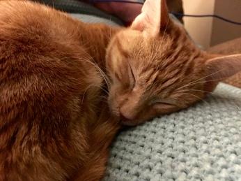 Our new orange kitten (No name yet) asleep.